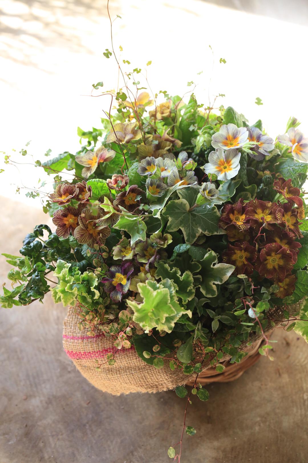 花の寄せ植えギャザリング