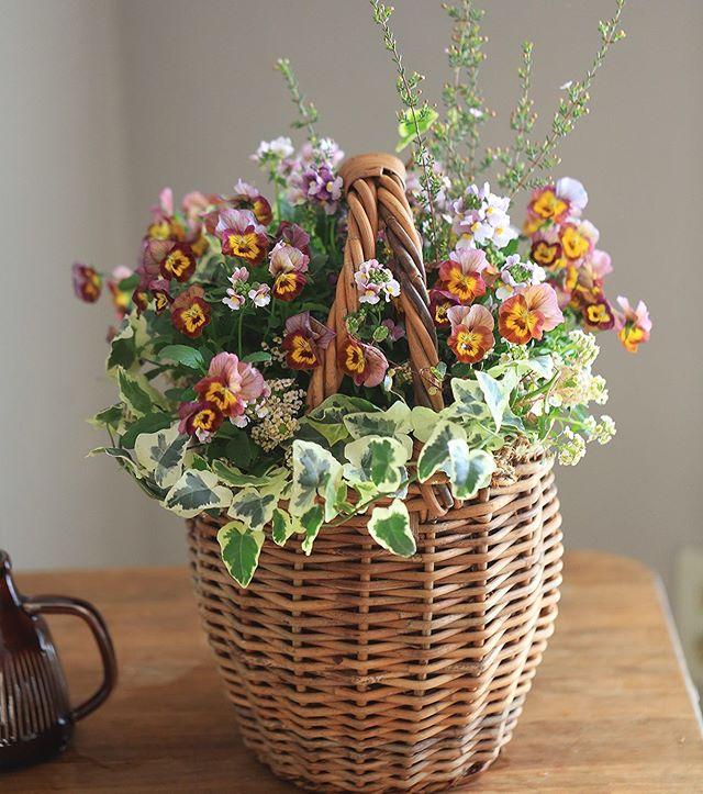 カゴカゴカゴ#全て根付きの植物 #bricolage_flower #ブリコラージュフラワー#華もみじ.#hanamomiji#gathering#floraldesign#bloom#gardening#plants#green#instaflowers#ig_flowers#instabloom#bloomjapan#team_jp_flower#アトリエ華もみじ#寄せ植え#花#花のある暮らし#ボタニカル#ガーデニング#植物#ハナモミジ#花好きな人と繋がりたい#フラワーアレンジメント#ギャザリング (Instagram)